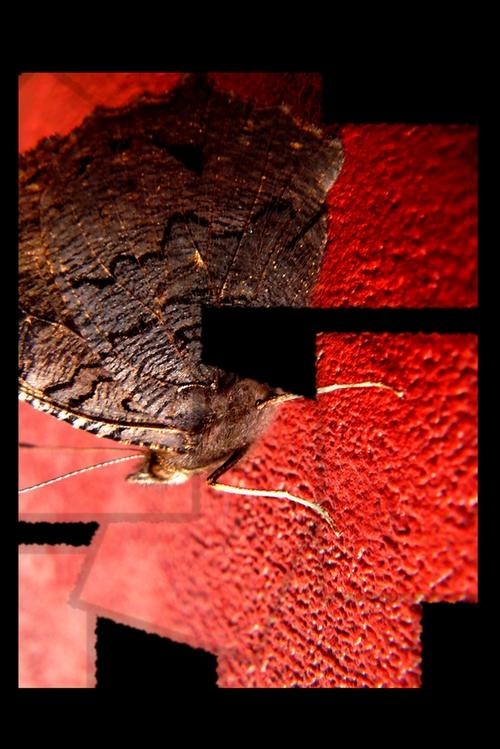 http://des-photos-parmis-tant.cowblog.fr/images/papillon.jpg